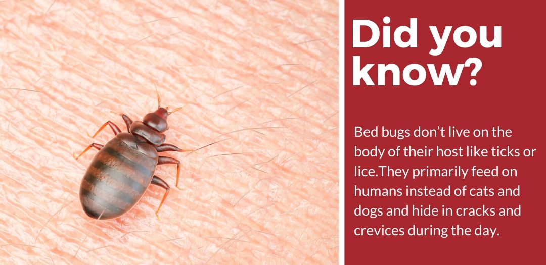 did you know best pet safe bed bug killer fact