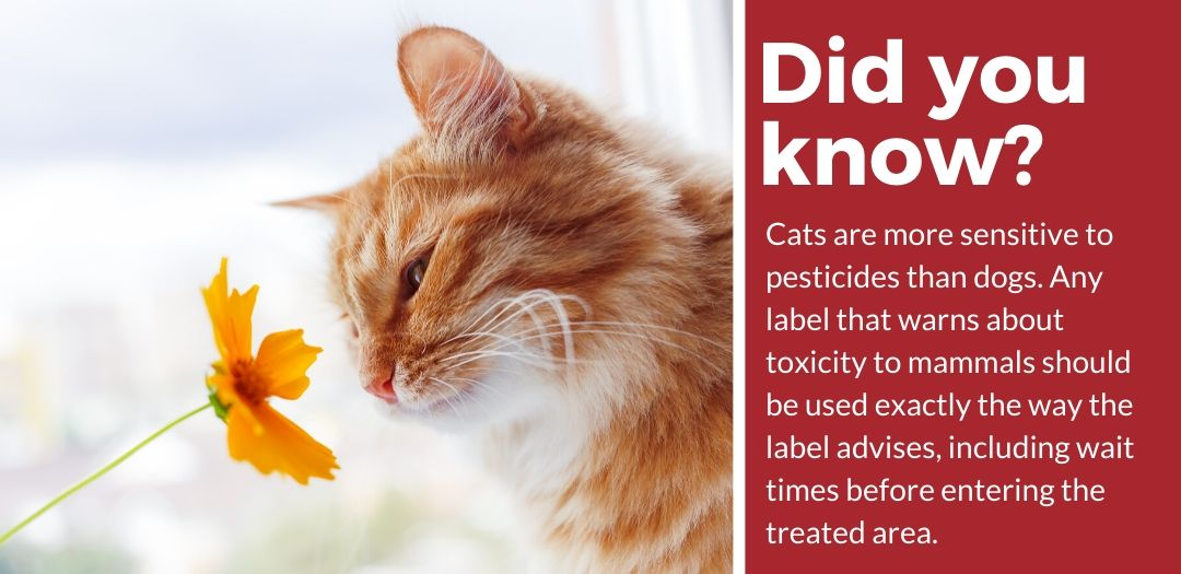 did you know best pet safe grub killer fact