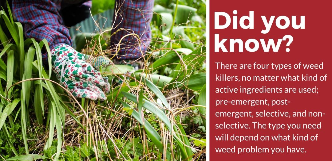did you know best pet safe weeds killer fact