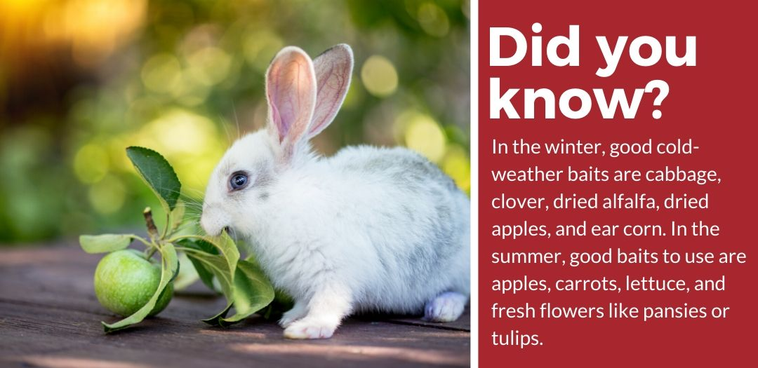 did you know best rabbit trap fact