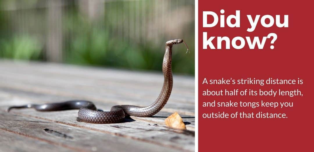 did you know best snake tongs