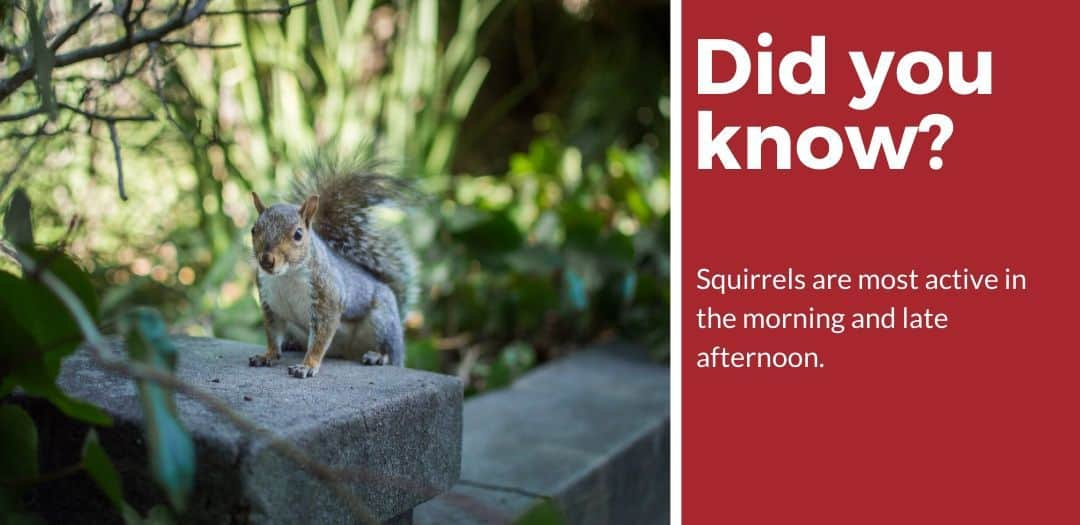 did you know best squirrel bait