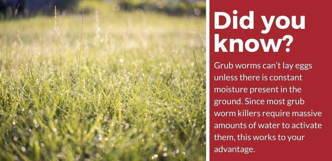 did you know grub worm killer