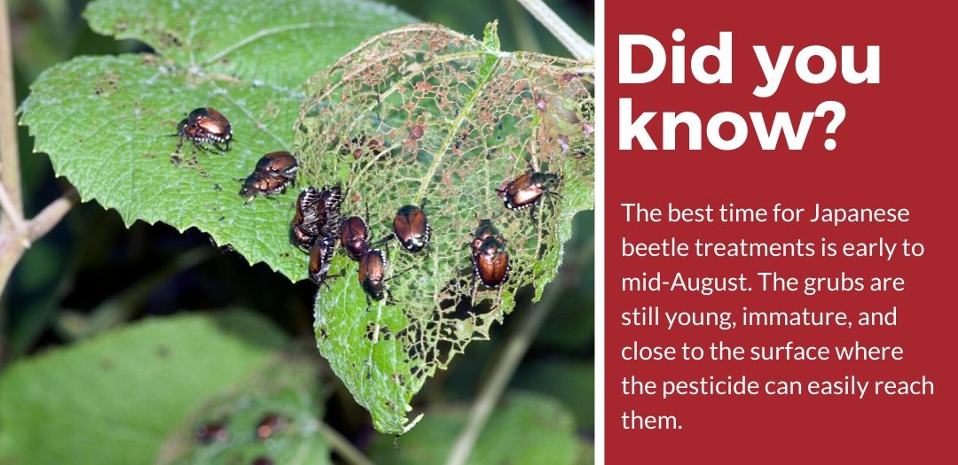 did you know japanese beetle insecticide fact