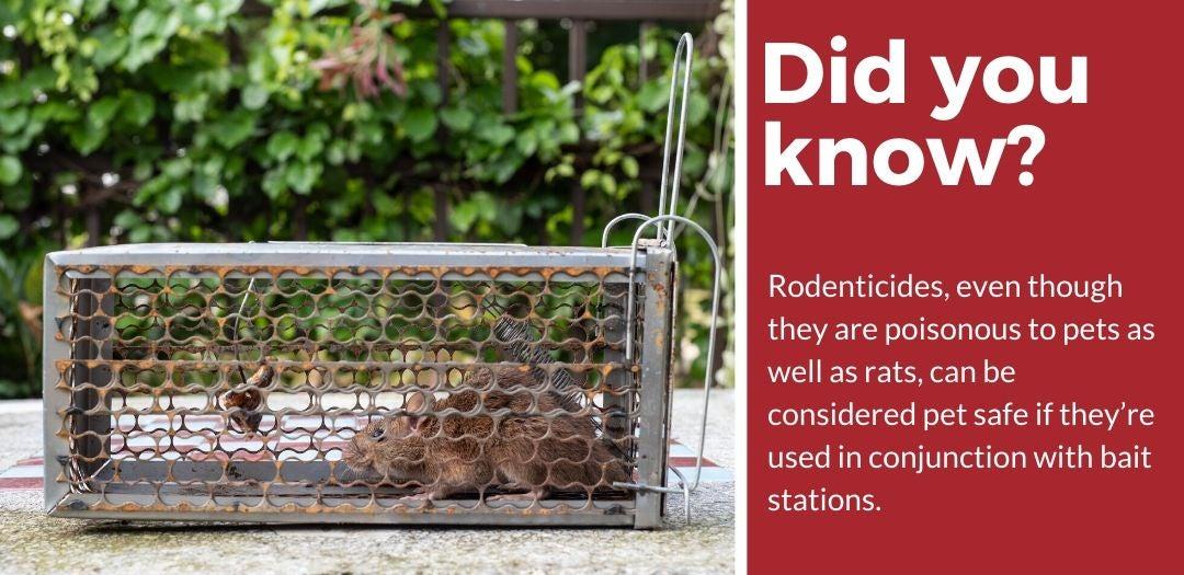 did you know pet safe rat killer fact