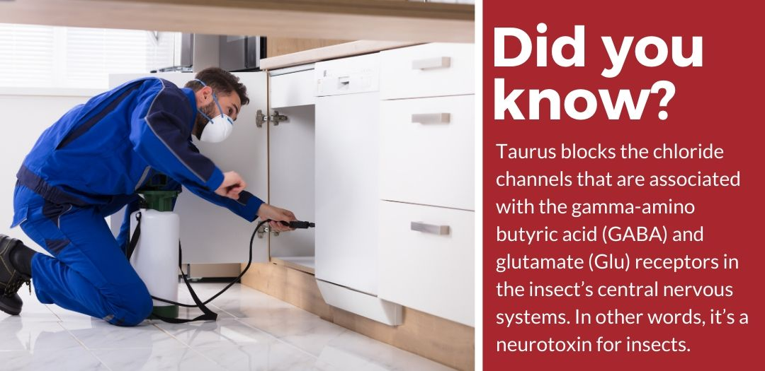 did you know taurus sc review fact