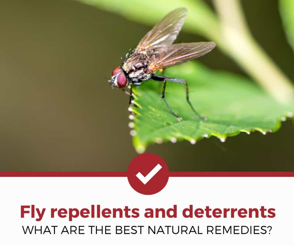 best fly repellents and deterrents