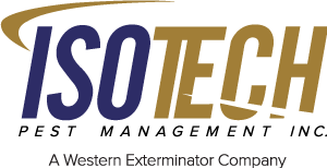 isotech pest management company review