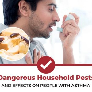 pests affecting people with asthma