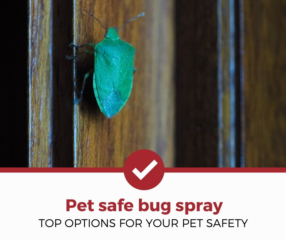 top best pet safe bug spray review