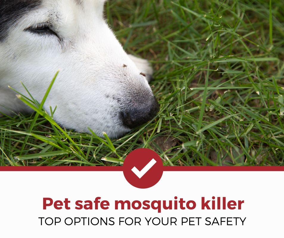 top best pet safe mosquito killer review