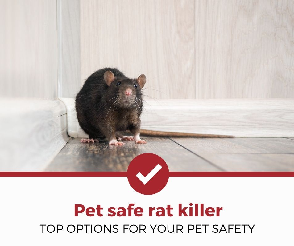 top best pet safe rat killer review