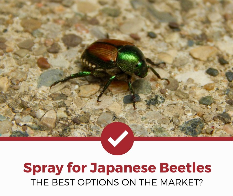 top best spray for japanese beetles review