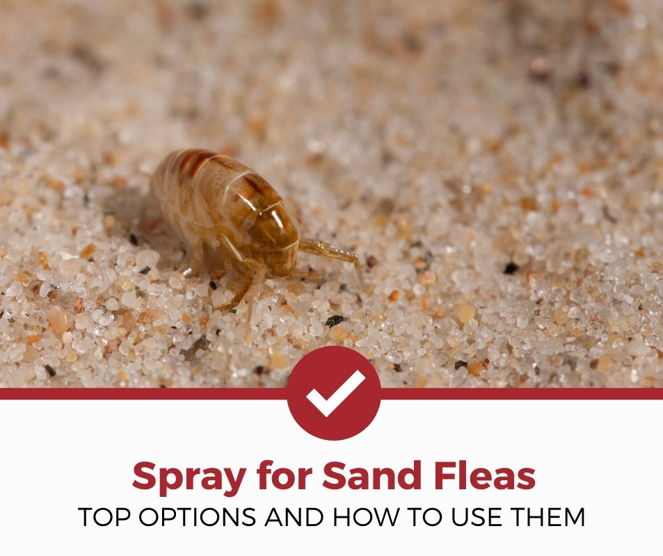 top best spray for sand fleas review